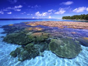 Coral reefs in Marshall Islands