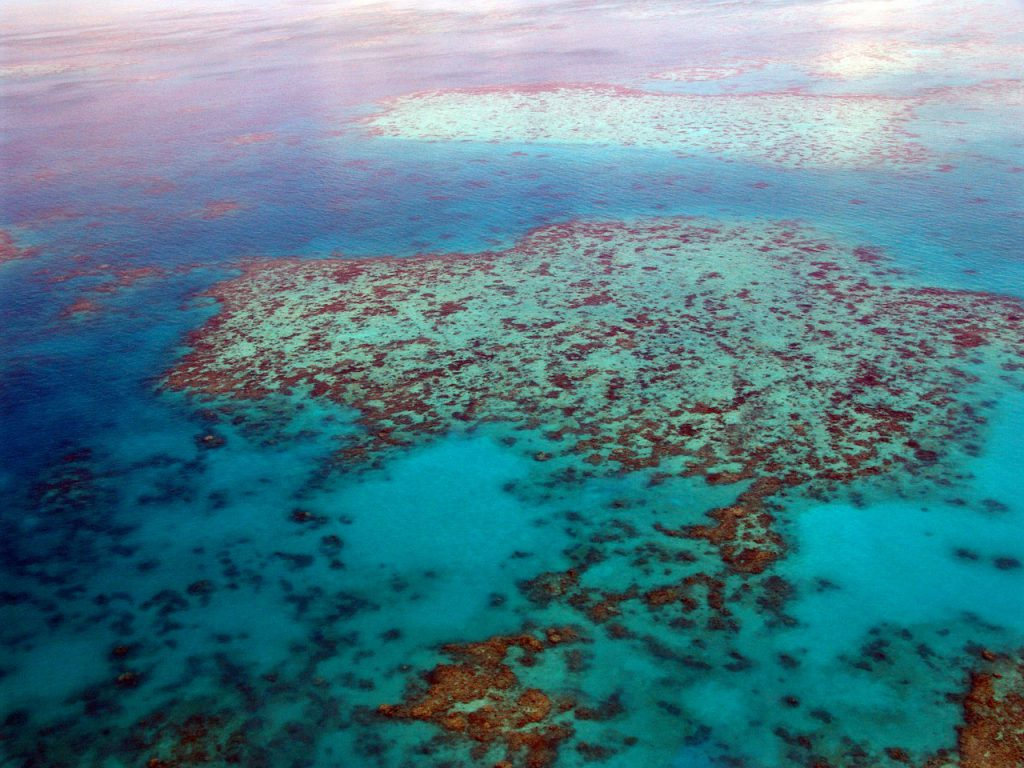 great-barrier-reef-261720_1280
